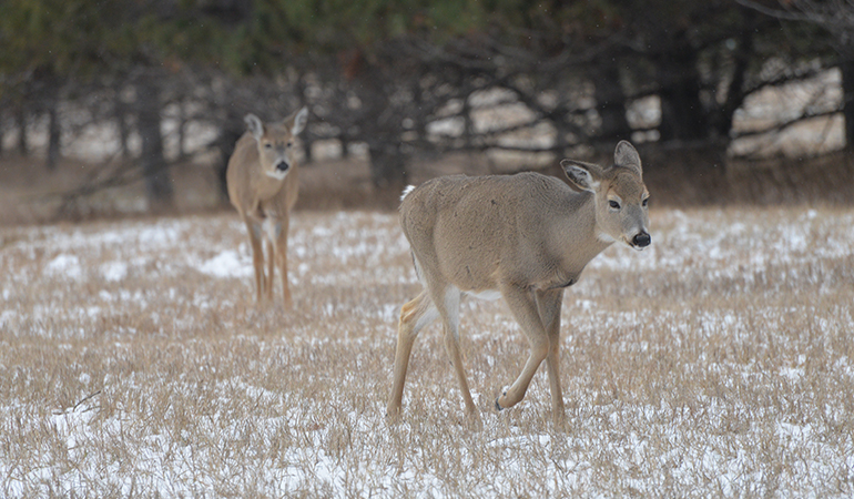 Late-Season Realities of Whitetail Hunting