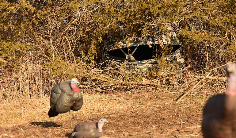 The Best Blinds for Bowhunting Turkeys