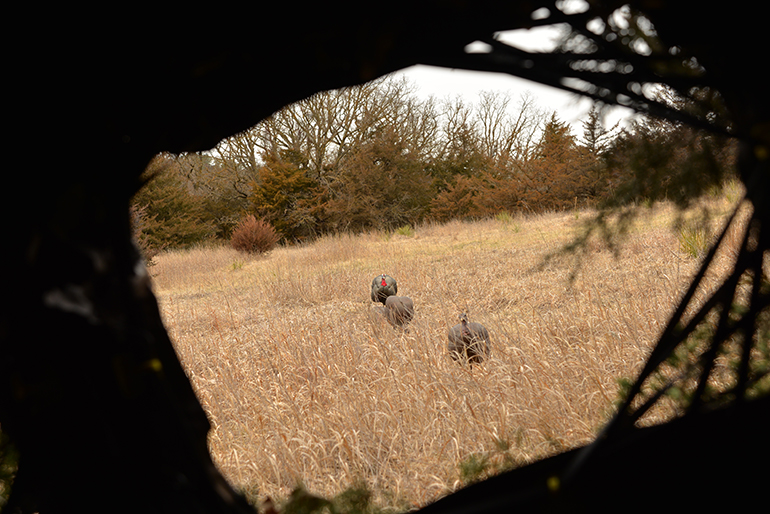 view from turkey blind setup with decoys