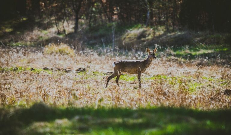 Is A Miracle Cure for CWD on the Horizon?