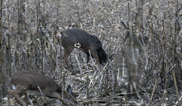 Will a marginal shot on one deer get the same results as a marginal shot on another?