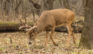 The rut is certainly one topic that gets every bowhunter excited!