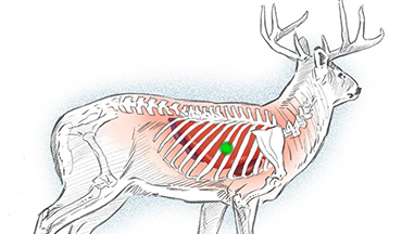 These are the archery shots you should and shouldn't take on whitetails.