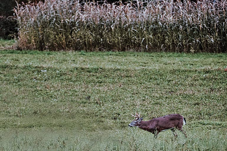 The Best Food Plots for Deer: Diverse Food Sources
