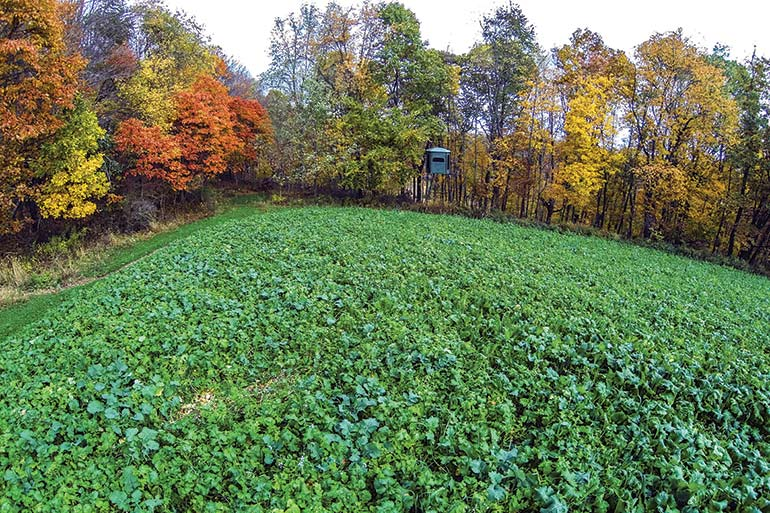 Fall Food-Plot Planting Guide