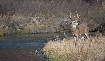 Small waters in the big woods can be a hotspot for tagging mature whitetails.
