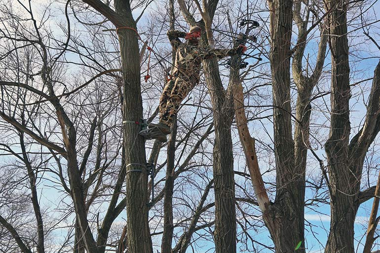 Why You Should Try Tree Saddle Hunting