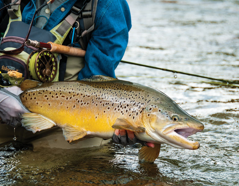 //content.osgnetworks.tv/flyfisherman/content/photos/Big-Brown-Trout-on-South-Island-New-Zealand.jpg