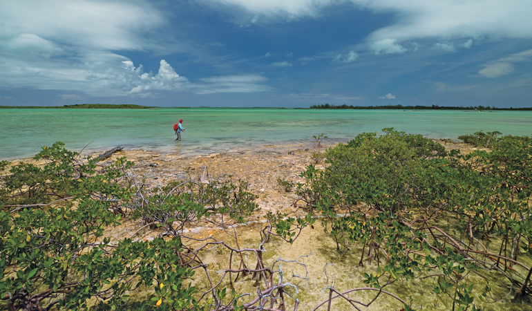 Bonefish in the Bahamas: Then & Now