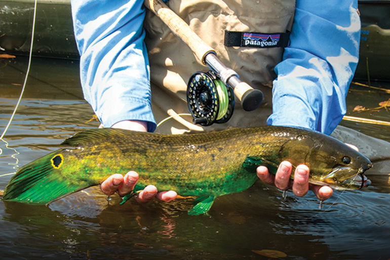 //content.osgnetworks.tv/flyfisherman/content/photos/Bowfin-Green-Spawner.jpg