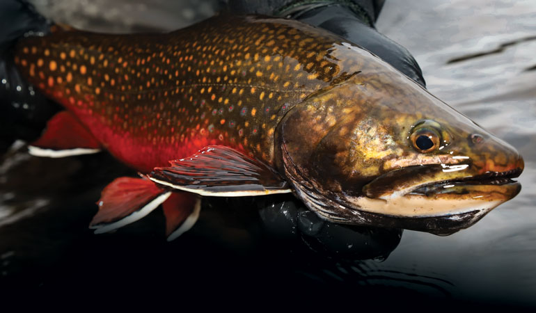 Brook Trout and Sea-run Browns on Chile's Navarino Island