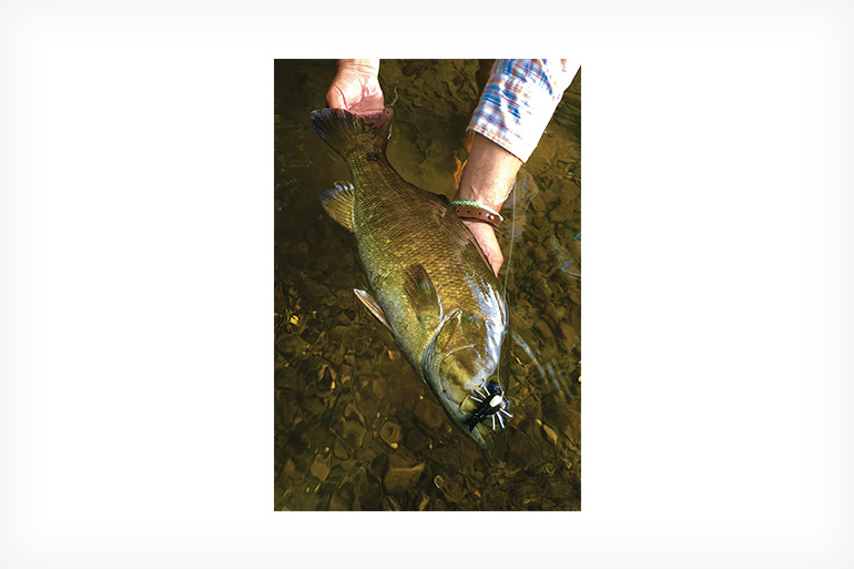 //content.osgnetworks.tv/flyfisherman/content/photos/Cicada-Hatch-Smallmouth.jpg