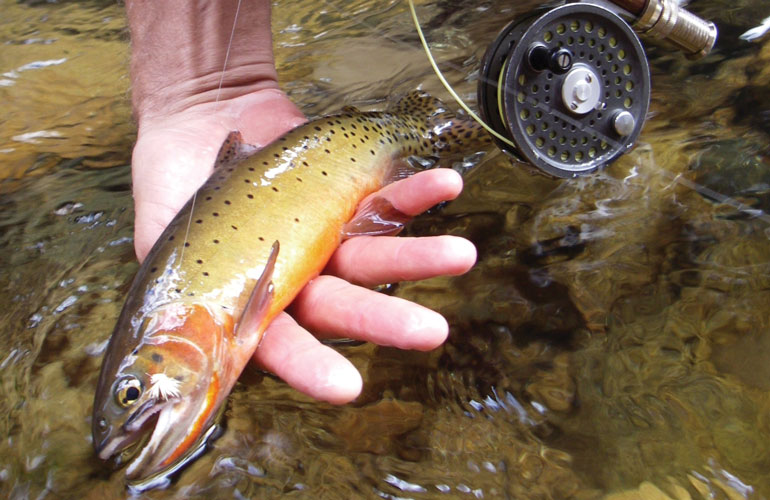 //content.osgnetworks.tv/flyfisherman/content/photos/Cutthroat-Trout-in-Small-Stream.jpg