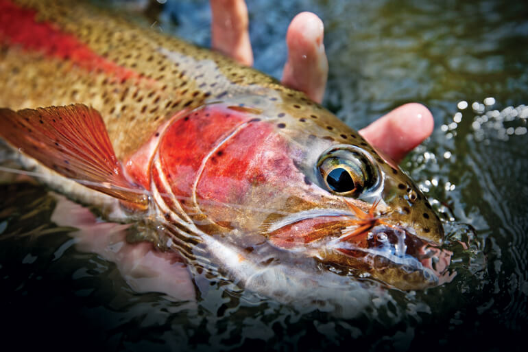 The Deschutes River stonefly emergence has the potential for some serious memory-making days.