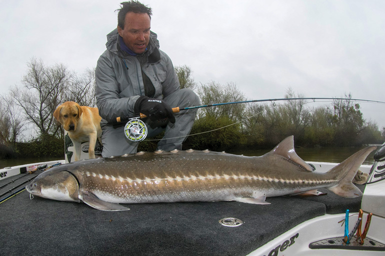 //content.osgnetworks.tv/flyfisherman/content/photos/JohnGSherman-Sturgeon.jpg