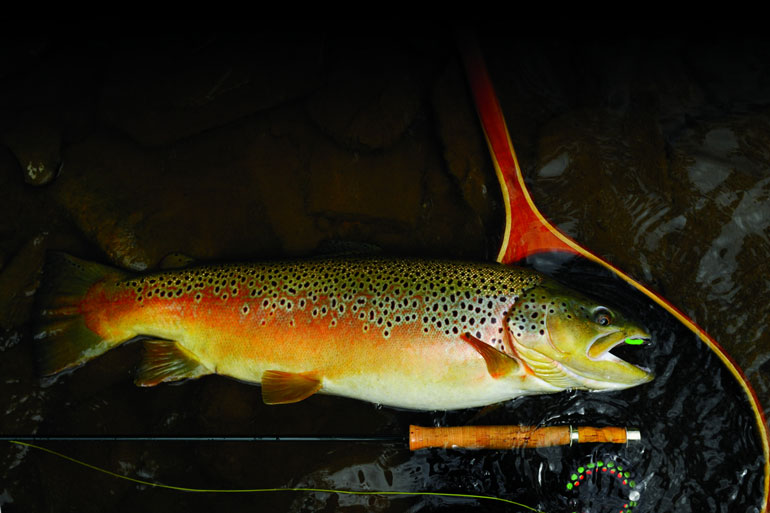 Terrestrial or land-born insects play an important role in the diets of trout throughout the season.