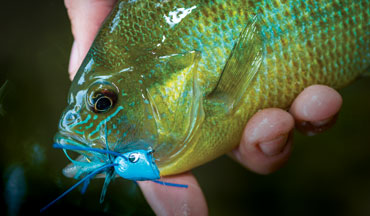 A new look at sunfish flies, tackle, and tactics.
