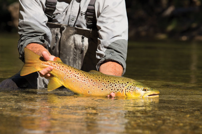 //content.osgnetworks.tv/flyfisherman/content/photos/Shields_J_Yosemite-13.jpg