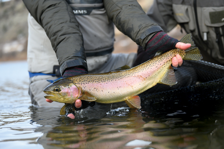 //content.osgnetworks.tv/flyfisherman/content/photos/Spey-Tactics-for-Trout.jpg