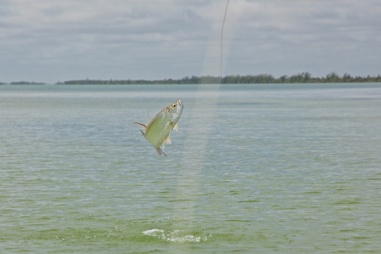 //content.osgnetworks.tv/flyfisherman/content/photos/Tarpon-Espiritu-Santo-Lodge.jpg