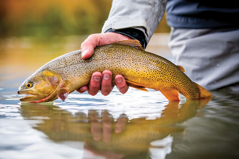 //content.osgnetworks.tv/flyfisherman/content/photos/Yellowstone-Cutthroat-at-South-Fork-River.jpg