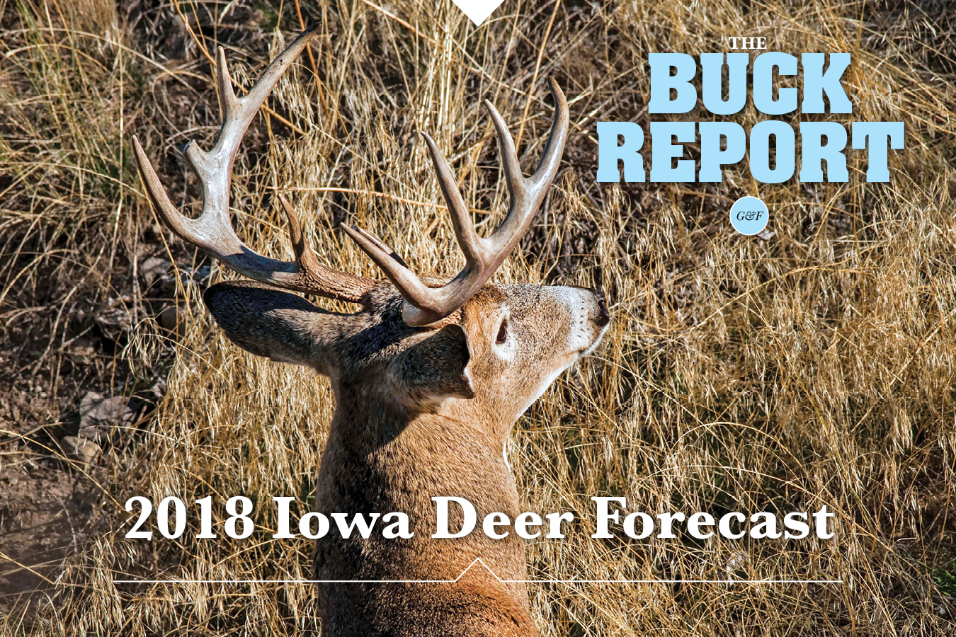 This detailed analysis of the Iowa deer picture will give you a realistic view of your 2018 hunting prospects.