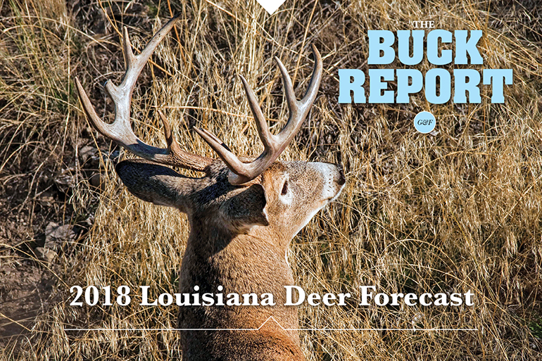 This detailed analysis of the Louisiana deer picture will give you a realistic view of your 2018 hunting prospects.