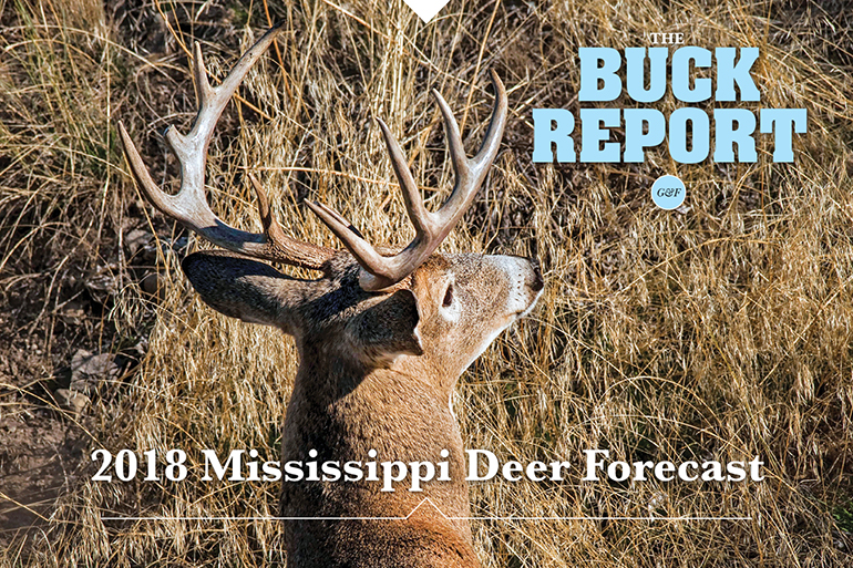 This detailed analysis of the Mississippi deer picture will give you a realistic view of your 2018 hunting prospects.