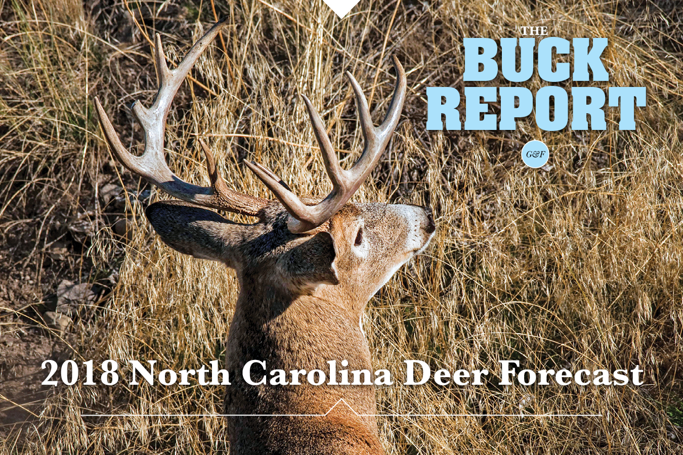 This detailed analysis of the North Carolina deer picture will give you a realistic view of your 2018 hunting prospects.