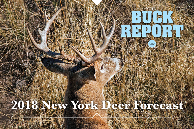 This detailed analysis of the New York deer picture will give you a realistic view of your 2018 hunting prospects.