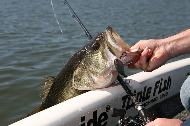 Guntersville and Pickwick are at or near the top of bassing bonanzas in Alabama.