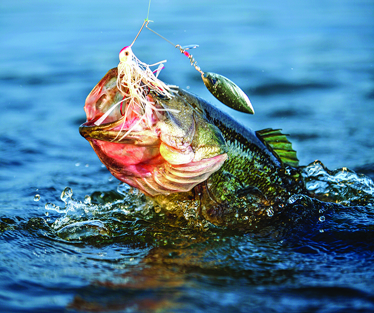 Largemouth bass is the premier freshwater gamefish for a high percentage of California anglers.