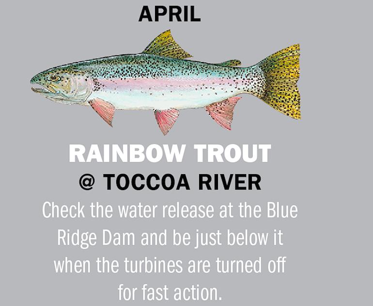 Georgia Fishing Calendar 2019