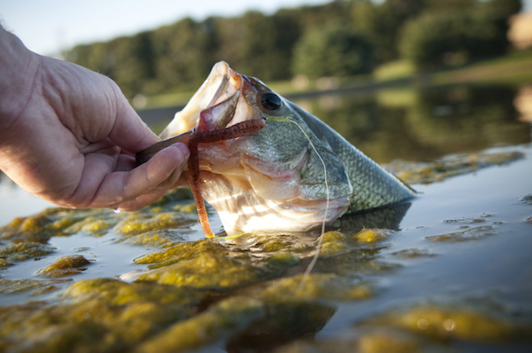 Learn how the pros catch more bass as waters cool.
