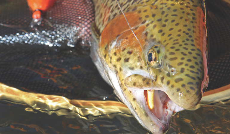 Easy Does It On Late-Fall Trout