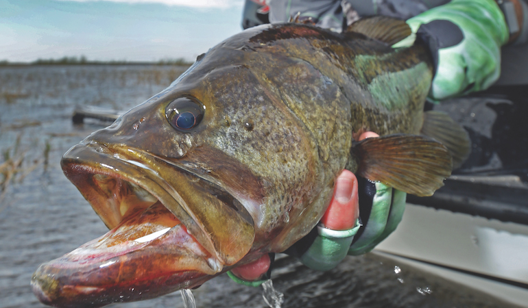 Fishing the pre-spawn time period ultimately means adopting flexible tactics to follow and fool bass.