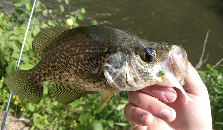 Crappie anglers who are prepared to fish in all types of conditions will fill the livewell.