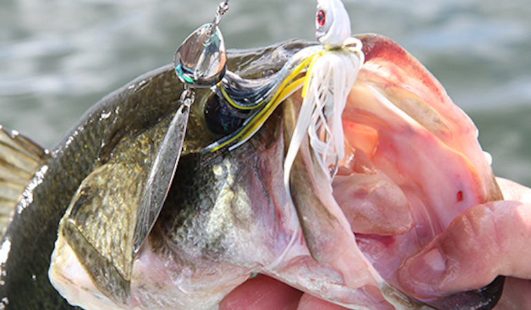 Sweet Spots: 4 Picks for Fall Florida Fishing