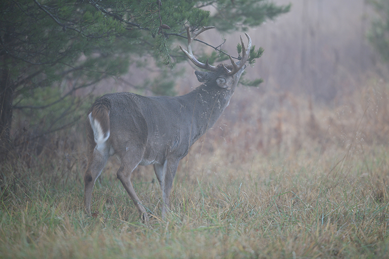 Ground Zero: Oklahoma's Record Bucks