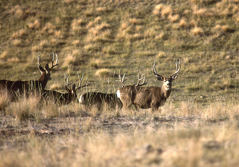 Ground Zero: Rocky Mountain's Record Bucks