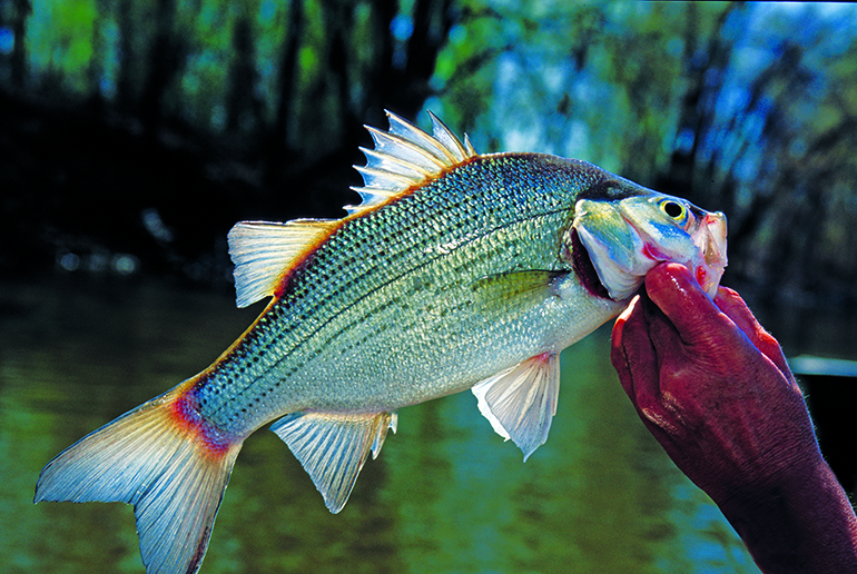 Here's a month-by-month look at the best fishing hotspots this year in Tennessee.