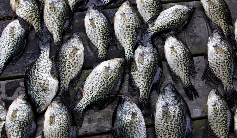 The crappie bite can be great in the Lone Star State, and here are some top spots to get in on the action this year.