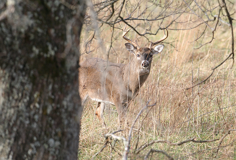 A large portion of the state's Boone & Crockett bucks in the past five years came from five counties in South Texas. Here's how to get in on the big-buck action down south.