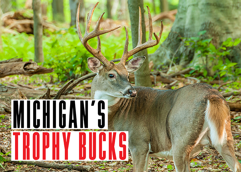 Some of the best counties in the Wolverine State continue to produce. Check out three of the biggest trophy whitetails taken in 2017.