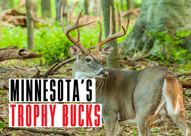 Every deer season, Minnesota hunters take some trophy bucks. Here are the stories behind three from last season.