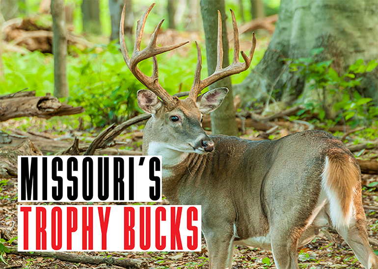 Every deer season, Missouri hunters take some trophy bucks. Here are the stories behind three from last season.