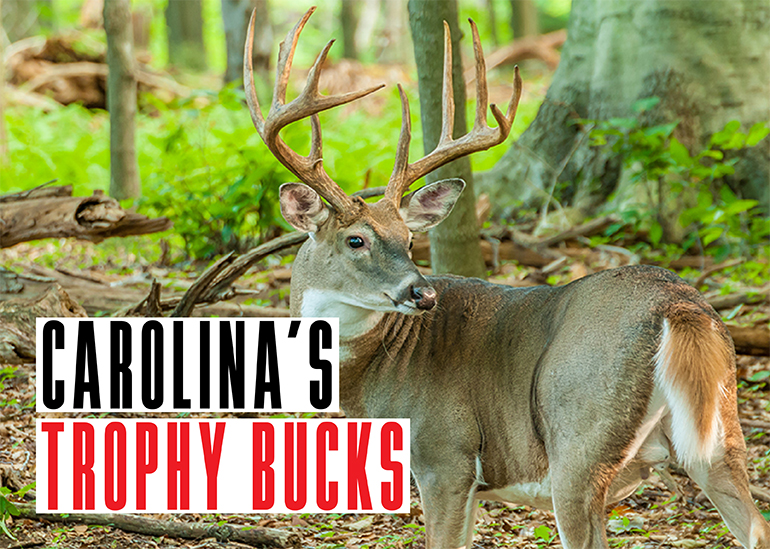 North Carolina Trophy Bucks
