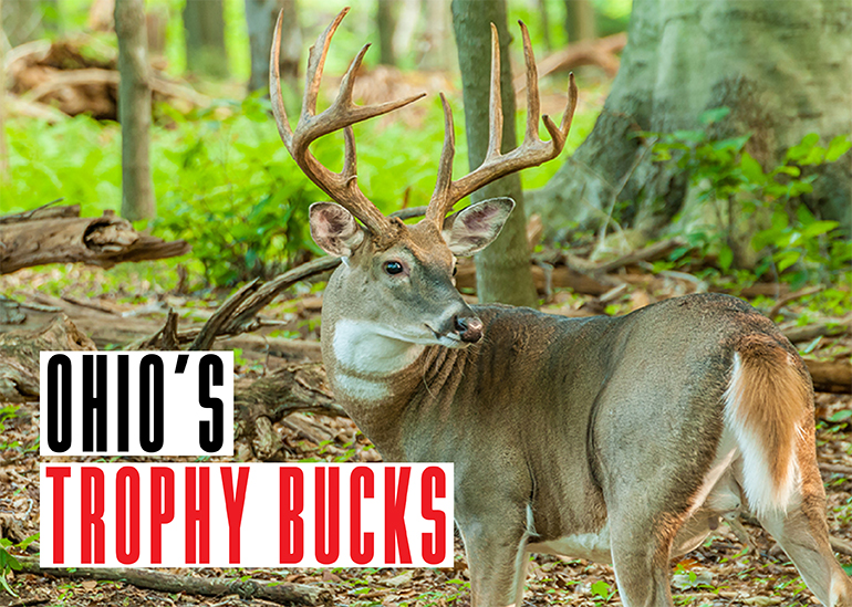 Ohio Trophy Bucks