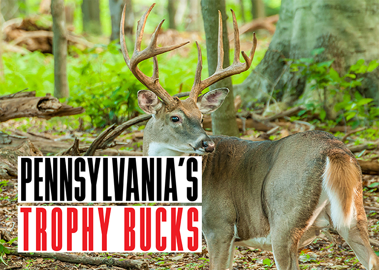 Every deer season, Pennsylvania hunters take some trophy bucks. Here are the stories behind three from last season.