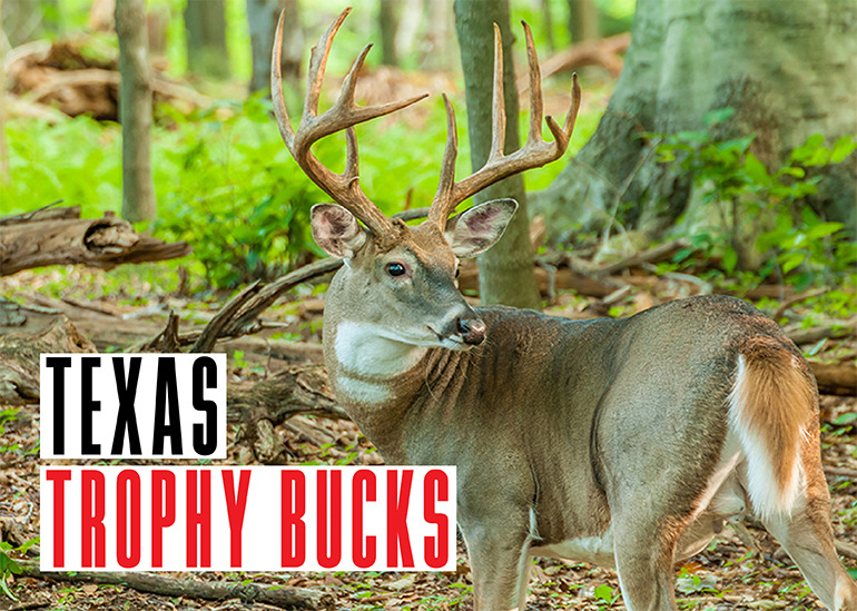 Every deer season, Texas hunters take some trophy bucks. Here are the stories behind three from last season.
